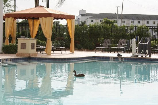 Herligt bes g picture of hilton garden inn orlando - Hilton garden inn international drive ...