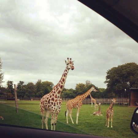 Luxury Hotels Near Woburn Safari Park