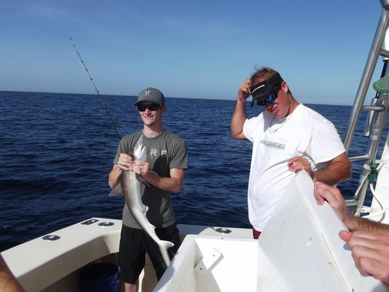shark picture of sea leveler sport fishing charters