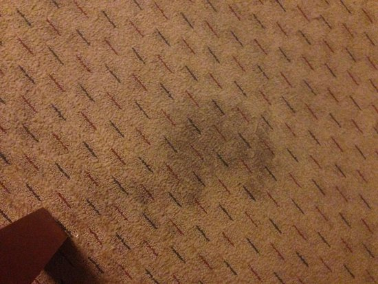 University Quality Inn: More carpet stains in my room