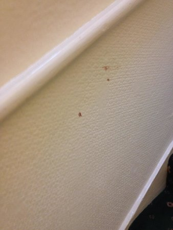 Merith House Hotel: Blood on walls