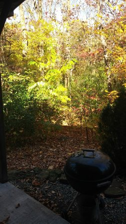 Oak Grove Cabins: View from the back porch, dense forest all around