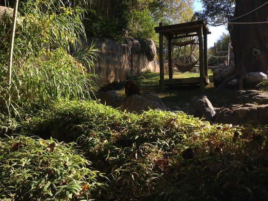 Low Land Gorilla Exhibit Picture Of Zoo Atlanta Atlanta Tripadvisor