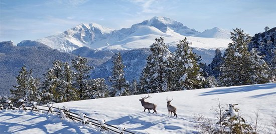 Estes Park, CO: Pristine Wildlife Watching