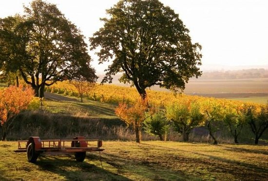Yamhill Valley Vineyards
