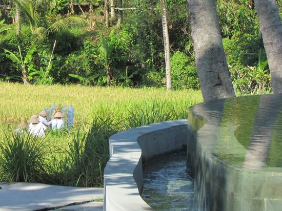 Kenanga Boutique Hotel: The pool and local people