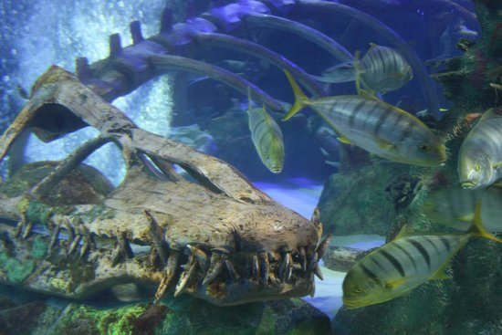 Lobster picture of sea life aquarium tempe tripadvisor Arizona mills mall aquarium