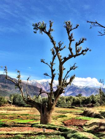 Amanjena: The excursion in a Berber village of the Atlas Mountains