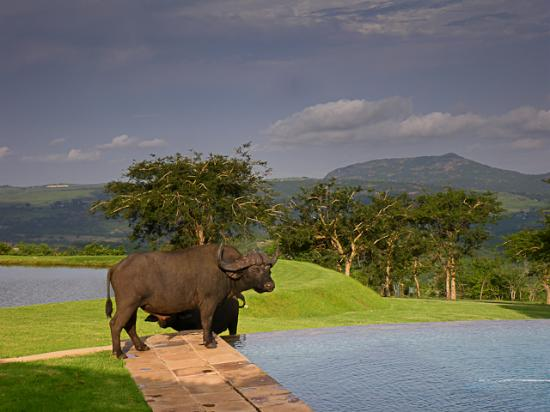 Likweti Lodge & Sanctuary