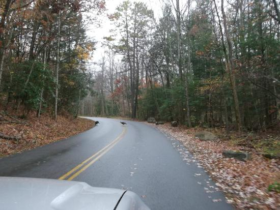 Elkmont (AL) United States  City pictures : Elkmont in The Great Smoky Mountains Picture of Elkmont Campground ...