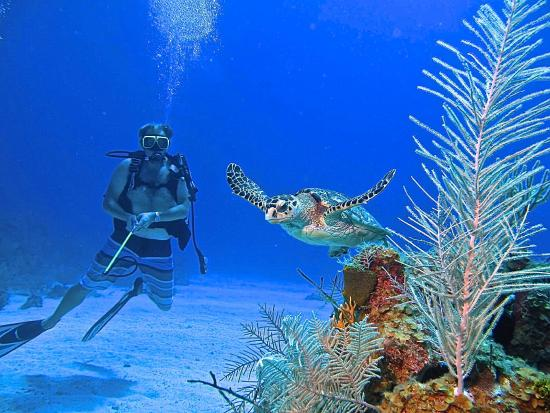 Things To Do Near The Ritz Carlton Grand Cayman In Seven