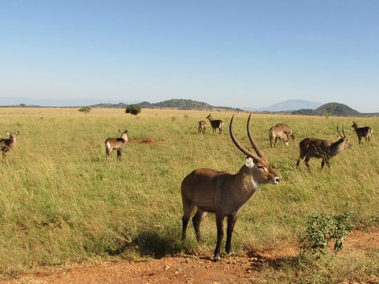 Kidepo National Park Hotels