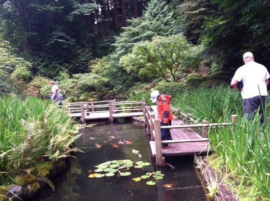 Koi ponds great for kids picture of portland japanese for Portland japanese garden koi