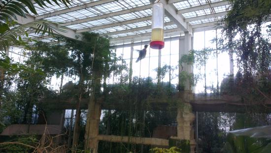 Hummingbird Picture Of Dallas World Aquarium Dallas