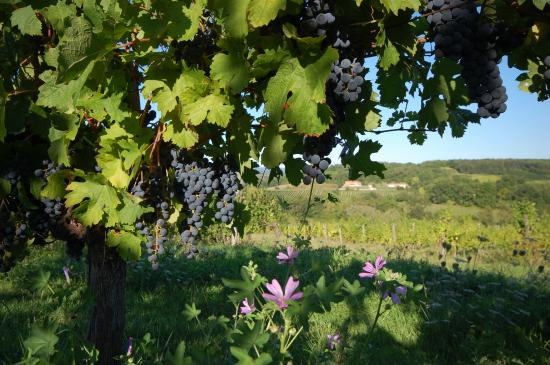 French Wine Adventures - Day Tours