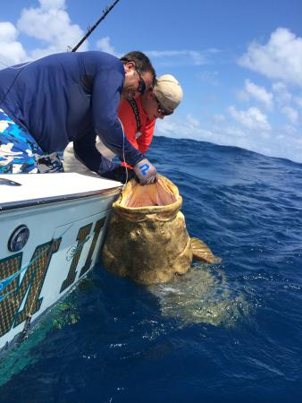 Me with a 500lb goliath grouper on the bnm ii picture of for Bud and mary s fishing report