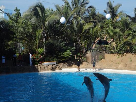 Dolphins were excellent - Picture of Loro Parque, Puerto ...