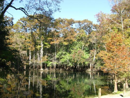 Chiefland (FL) United States  City pictures : ... Picture of Manatee Springs State Park, Chiefland TripAdvisor