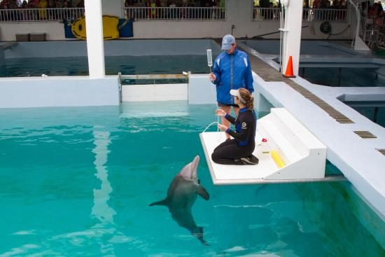 Winter And Hope Picture Of Clearwater Marine Aquarium