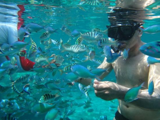 Good coral shallow for beginners lots fish picture of for Good beginner fish