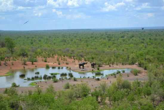 Victoria Falls Safari Club: Elephants from the main lodge's viewing deck