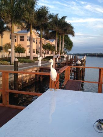 Fishing picture of barefoot beach resort indian shores for Florida fishing lodges