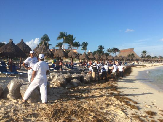 Gbp Staff Cleaning Up Sargassum Seaweed There Was So Much