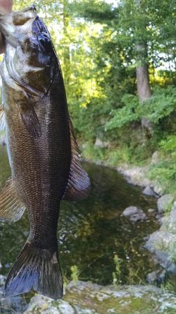 Milford, ME: Guest Caught Smallmouth behind the property(Sept. 2014)