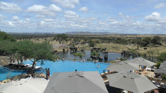 Photo of Bilila Lodge Serengeti National Park
