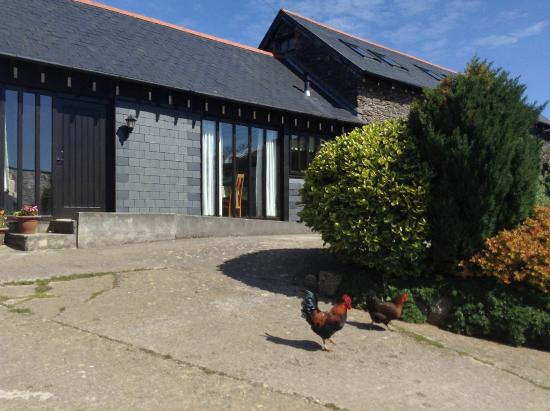 Traine Farm Holiday Cottages