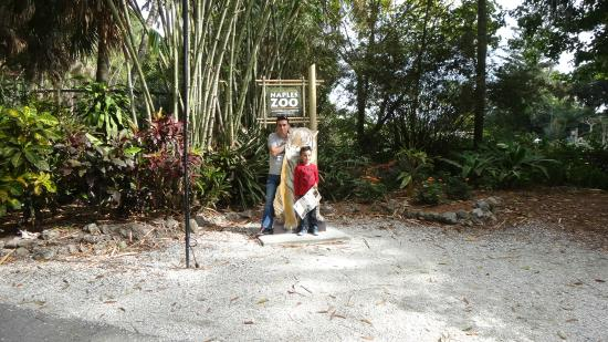 Tigers Picture Of Naples Zoo At Caribbean Gardens Naples Tripadvisor