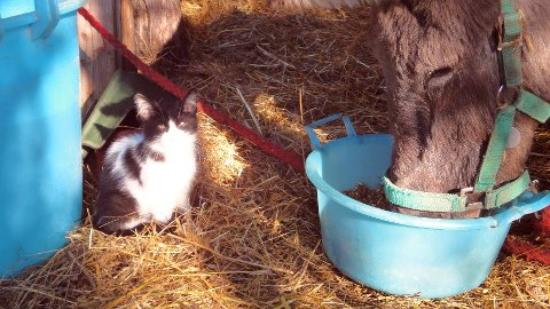 donkey and cat - Picture of Corfu Donkey Rescue ...