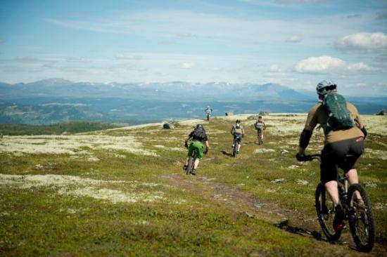 Hillbilly MTB - Day Tours