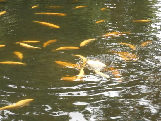 Albino Rainbow Trout Picture Of Salmon Ponds New