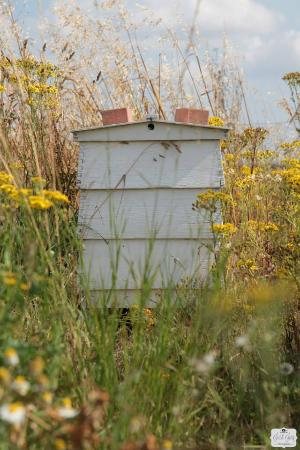 Gestingthorpe, UK: Bee Hives