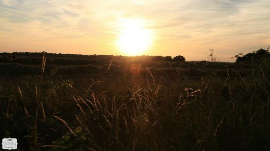 Gestingthorpe, UK: Sunset at The Pheasant