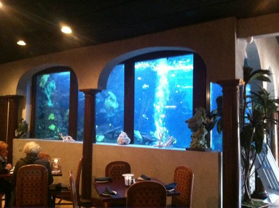 saltwater grill aquarium picture of saltwater grill