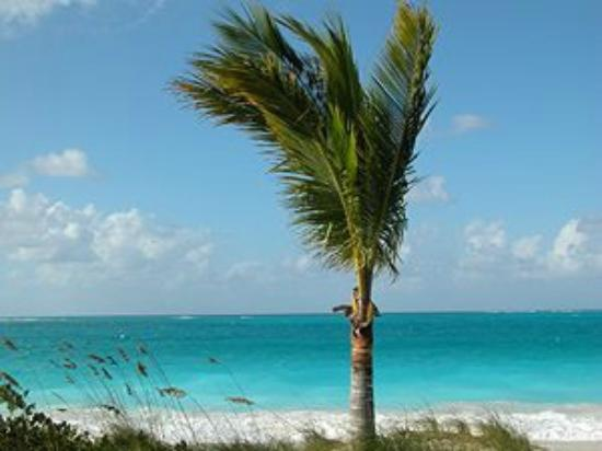 View From Our Room Picture Of Coral Gardens On Grace Bay