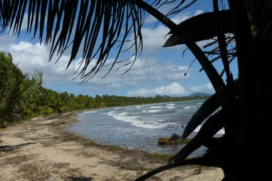 Nice Beach Along the Trail Picture of Humacao Nature