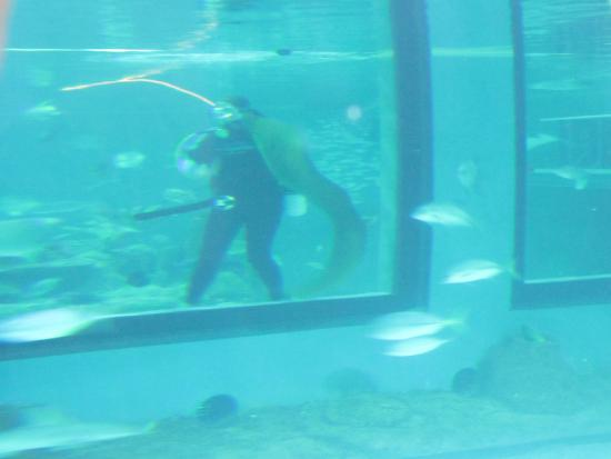 A Diver Feeding Fish To The Eel 39 S And Sharks Picture Of
