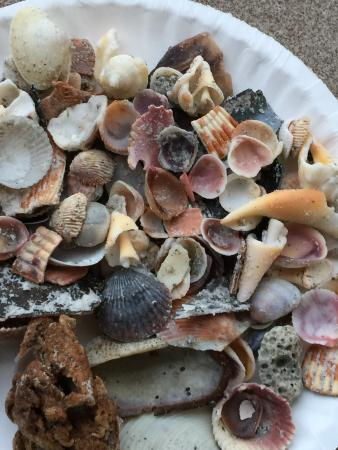 Beach Place Condos at John's Pass Village: Seashell collection-Madeira Beach