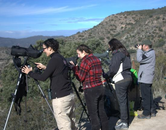 Birdwatching Spain - Private Tours