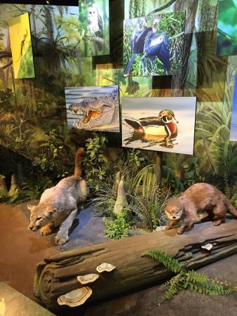 Everglades Display Picture Of South Florida Science