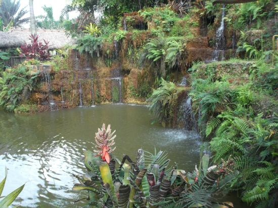 Schnebly Redland's Winery: Don't miss the fish pond