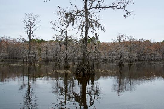 Canoe picture of caddo lake state park karnack for Caddo lake fishing report