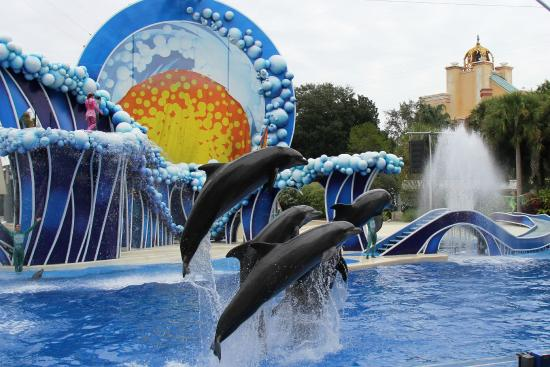 Seaworld Orlando Reviews Orlando Central Florida