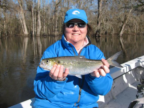 Shad fishing on the neuse river picture of spec fever for Neuse river fishing