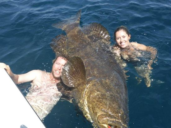 South african clients with huge goliath grouper out of for Goliath grouper fish