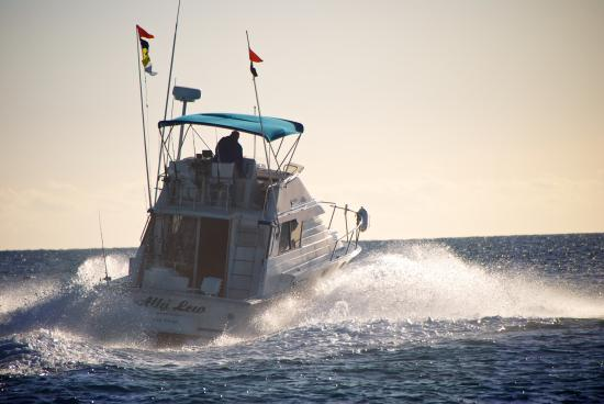 Our 105 sailfish picture of catch fish cabo san jose for San jose del cabo fishing report
