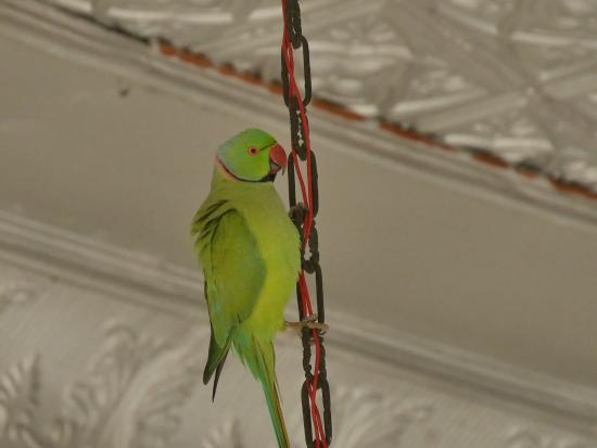 Dhaulpur, India: A feathered visitor